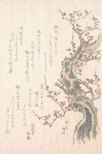 Ryūryūkyo Shinsai~『春雨集』 摺物帖柳々居辰斎画 紅梅