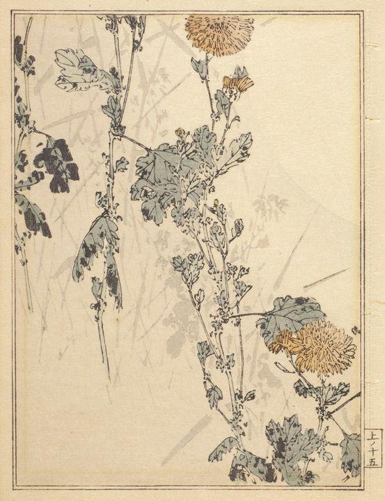 Meiji~Chrysanthemums - Old classic art