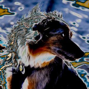 HOUND DOG - Brian Lee Bender
