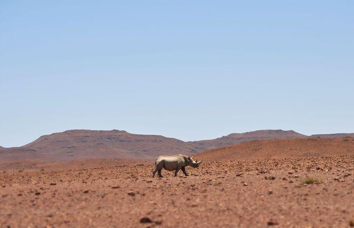 Desert Black Rhino - Desert Art