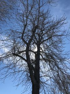 Winter Tree on Sunny Day - toksdesign