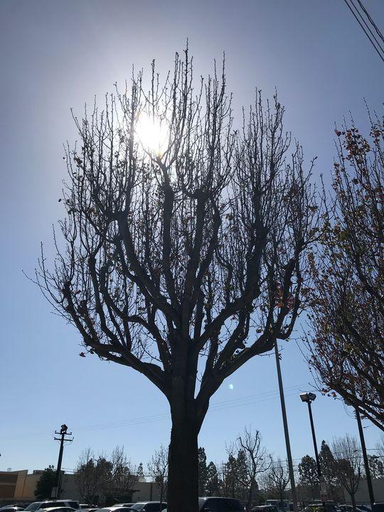 Tree Silhouette in City - toksdesign