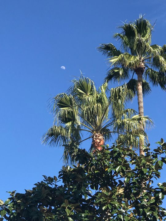 Palm Trees and the Moon - toksdesign