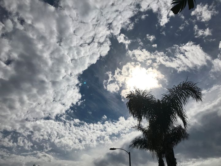 Palm Trees and Sunny Sky - toksdesign