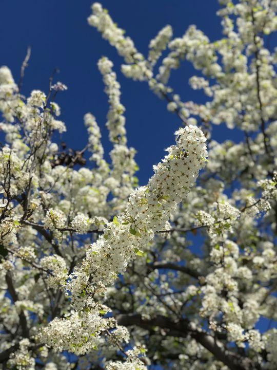 Early Spring Bloom - toksabukadesign