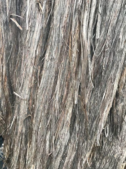 Gray Tree Trunk - toksdesign