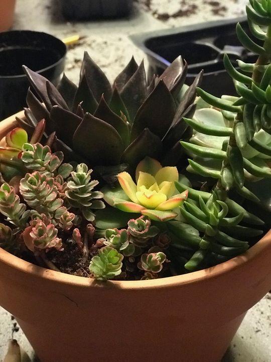 Cozy Succulents - toksdesign