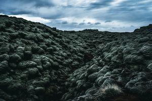 Volcanic Moss