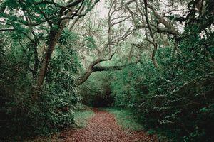 Charlestowne Forest