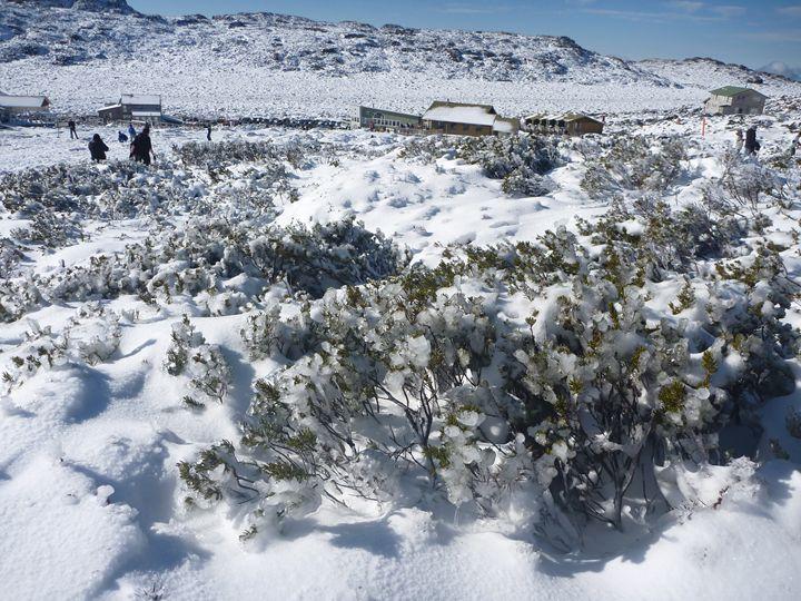 Snow at Mt Ben Lomond Tasmania - L J Bell