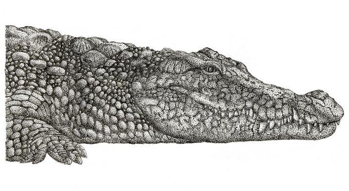 Crocodile - Pointillism #1 - Auriga
