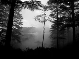 Landscape In The Mist