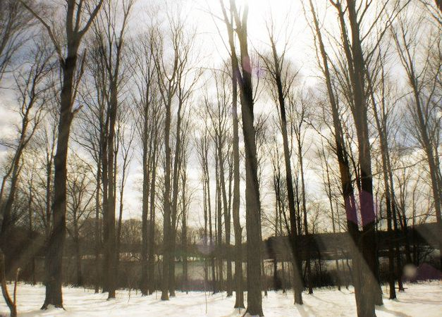 Audubon Woods - Danielle Robbins Photography