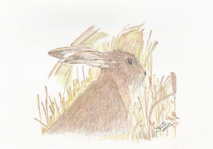 Hare - Jacqueline Foulds