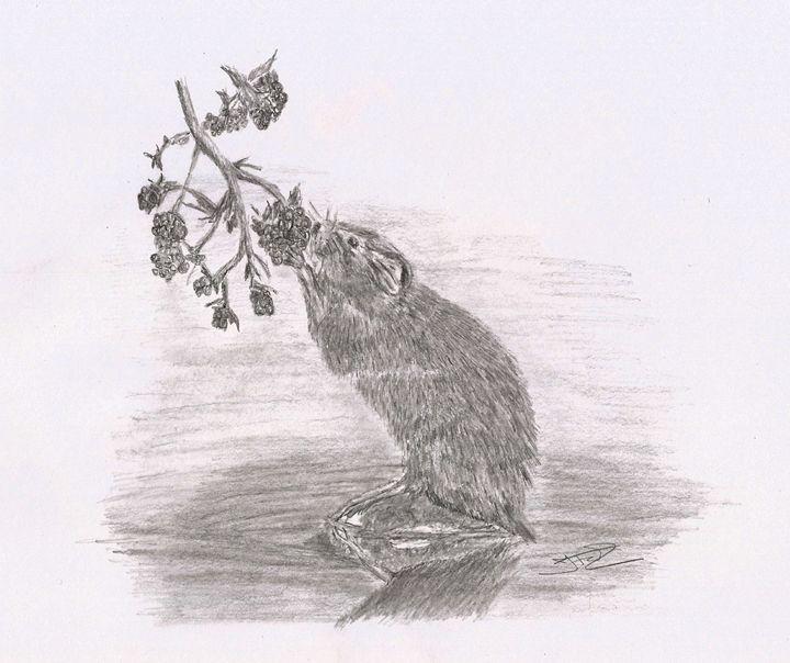 Ratty - Jacqueline Foulds