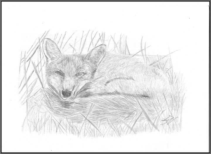 The sleeping Fox - Jacqueline Foulds