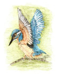 The Kingfisher - Jacqueline Foulds