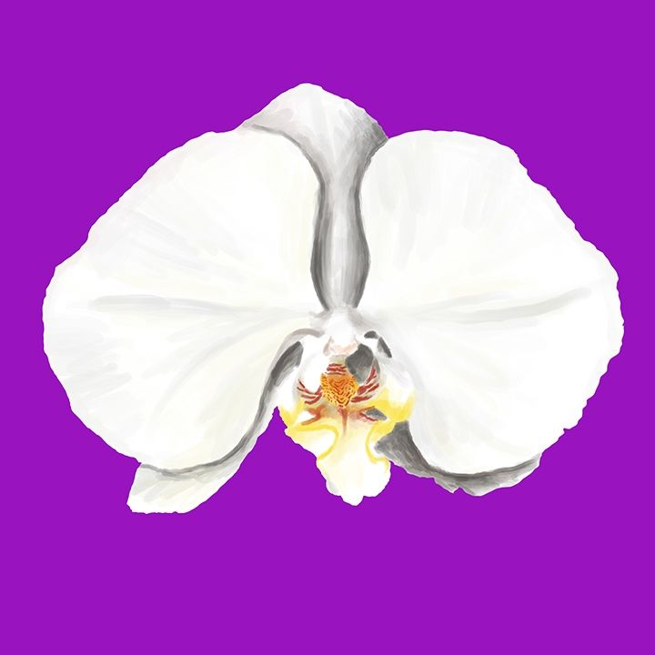 Orchid I - Hasnul Hassan