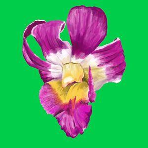 Orchid III