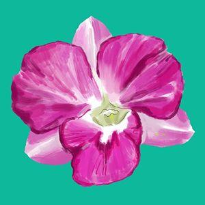 Orchid V