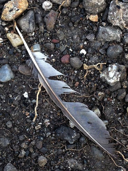 Feather Lost and Found - J5rson! Art & Photography