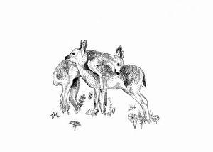 Deer fawns in the field