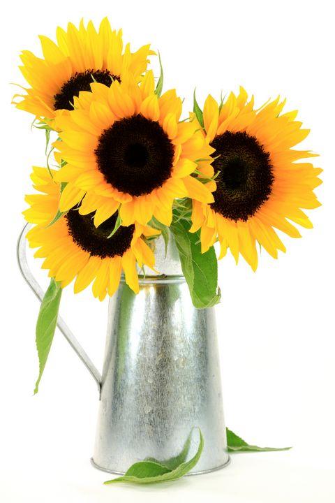Sunflowers Bouquet. - MORNING LIGHT