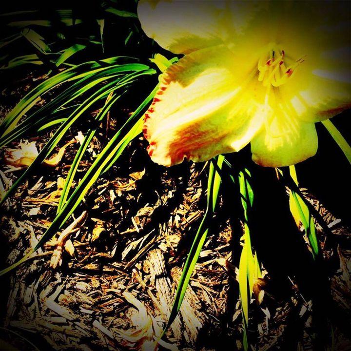 The Darkened Garden - Anna's Treasures
