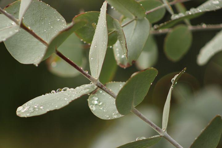 Dew Drop - AJ Photography
