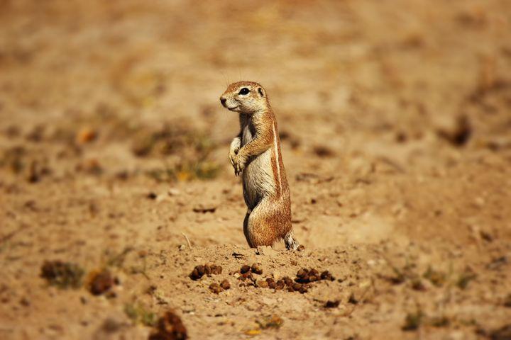 Curious Squirrel - AJ Photography