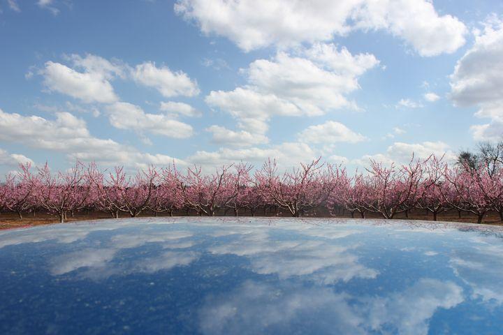 Peach Blossom on a Sea of Blue - Adirondack Art & Soul