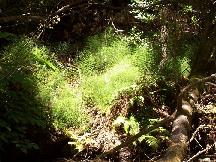 Captured Sunlight - Adirondack Art & Soul