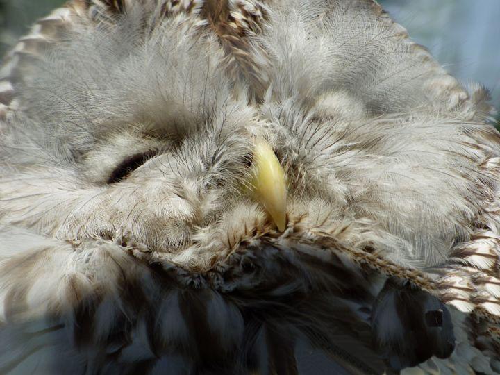 sleepy owl - beauty by design