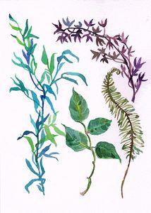 Aquarelle, watercolor feuillages