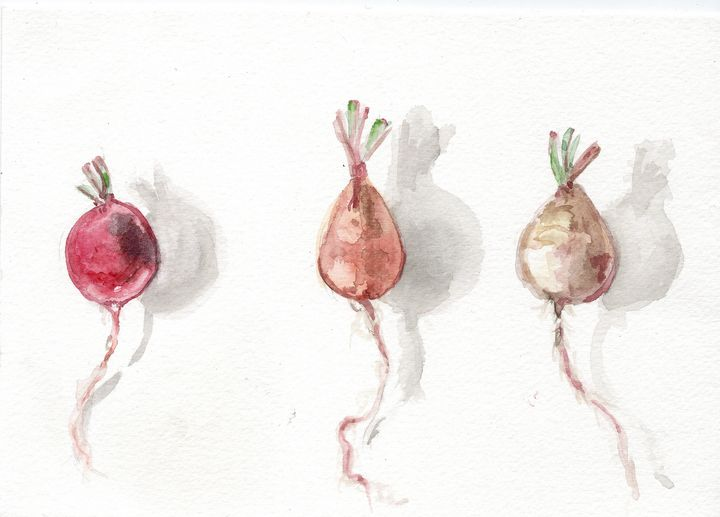 Original watercolor, radis - voicivoilà