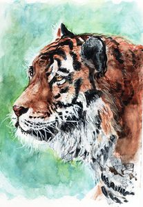 watercolor, tiger, aquarelle,  tigre