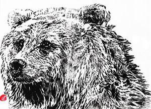 linocut,gravure,bear