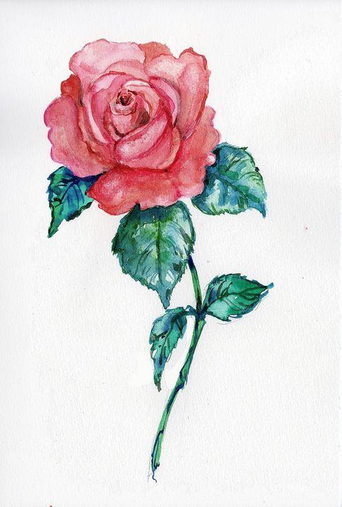 watercolor, aquarelle, rose rose - voicivoilà