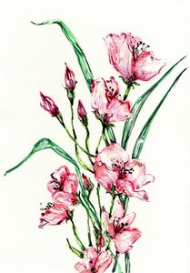 Watercolor, fleurs de cerisiers