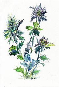 watercolor aquarelle chardons bleus