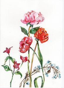 watercolor, peony, fleurs
