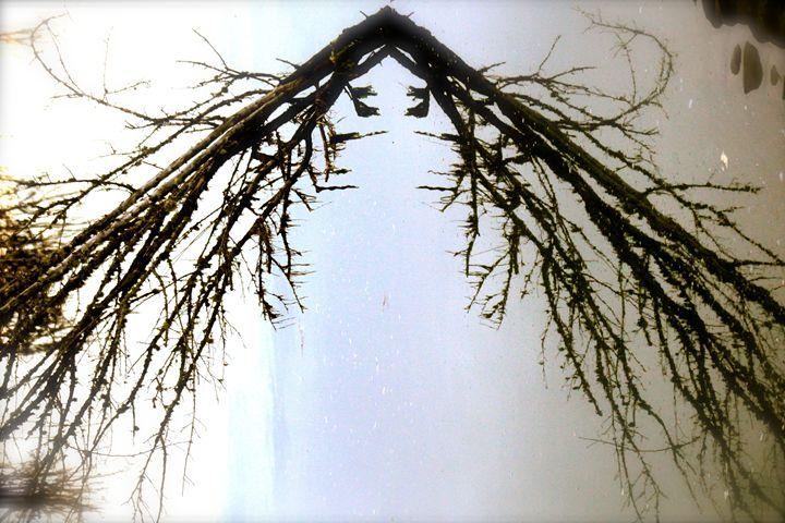 Driftwood Vaniashing Point - kt