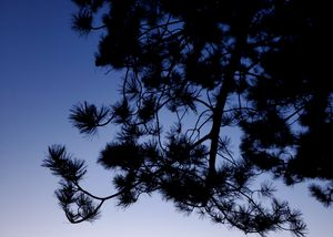 Backlit Branches