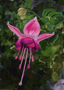 Dancing Pink Fuchsia Flower - LozsArt