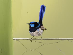 Blue Wren on a Wire