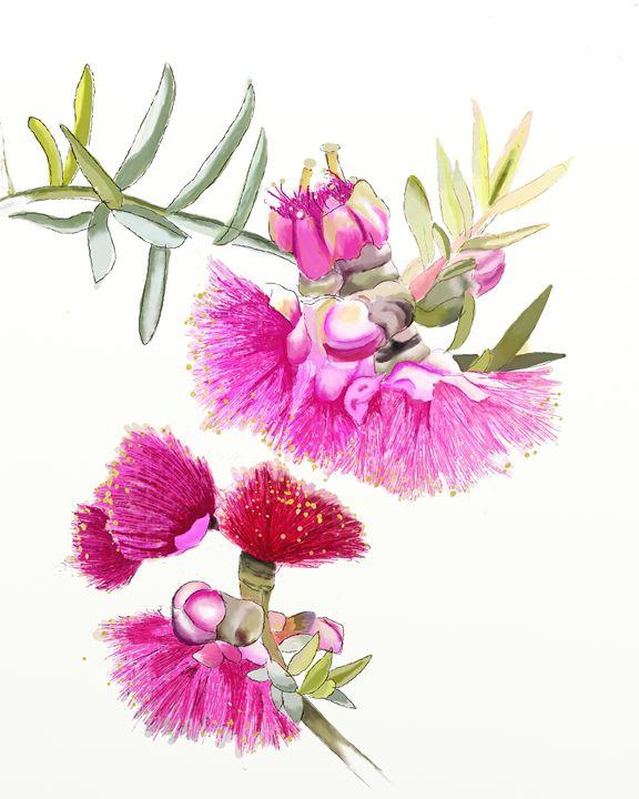 Australian Pink Gumnut Wild Flower - LozsArt