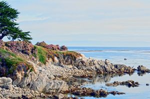 Ice Plant Along The Monterey Shore - FASGallery/ArtPal