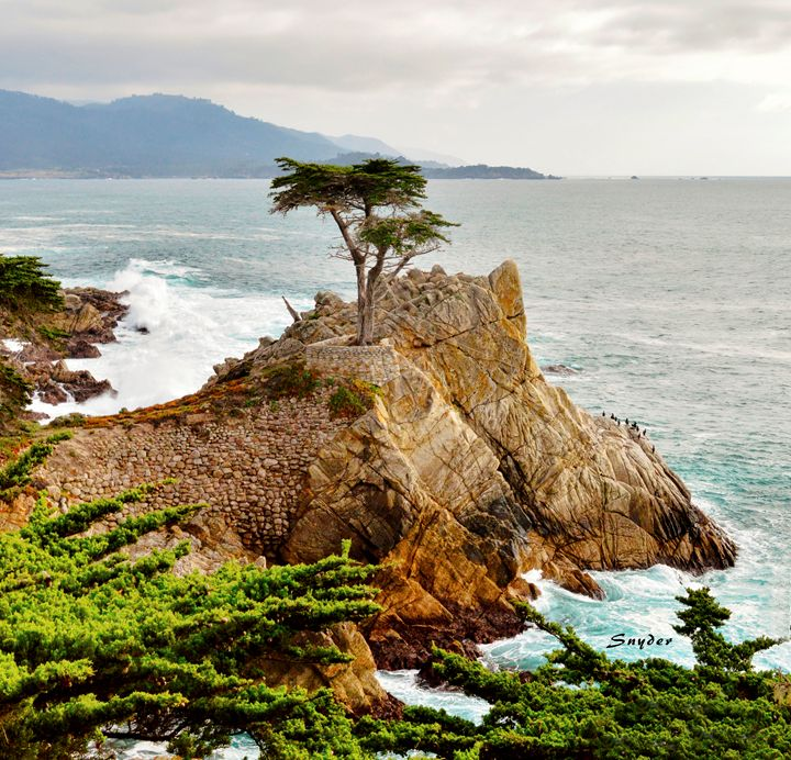 17 Mile Drive - Famous Lone Cypress - FASGallery/ArtPal