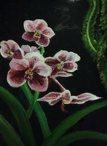 Waling Waling Orchid