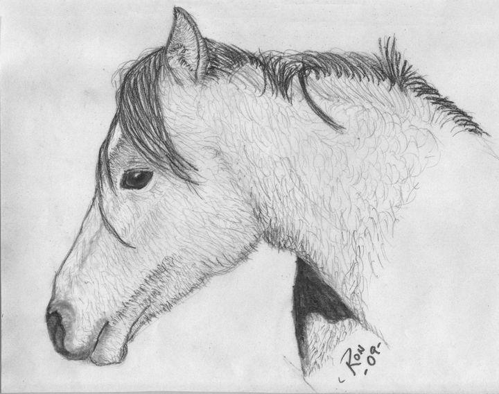 horse - Drawings